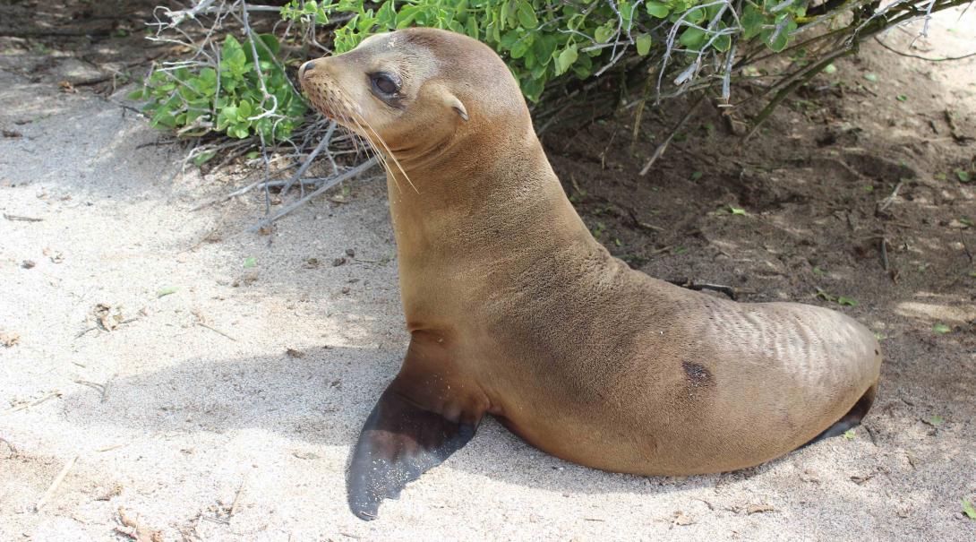 Leones marinos en la playa de las Islas Galápagos
